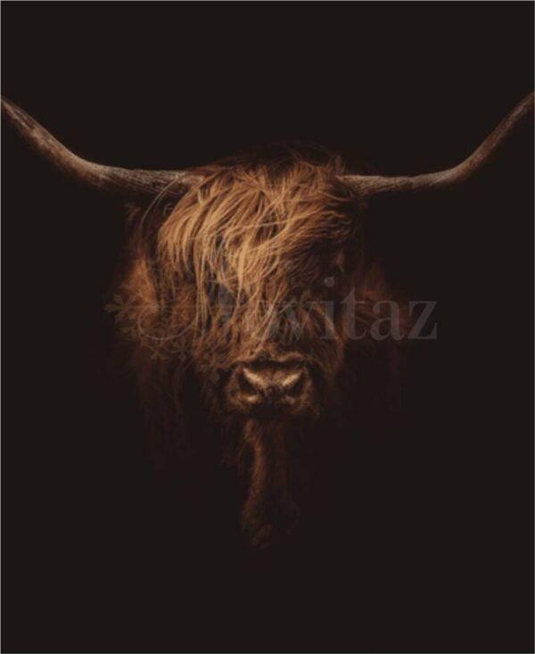 Schilderij-Schotse hooglander